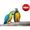 Individual Health Check (APV / PBFD / Chlamydia / Herpesvirus / PDD / Aspergillosis)